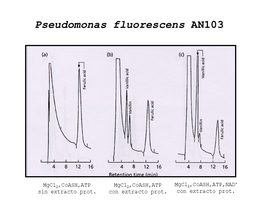 Pseudomonas fluorescens AN103