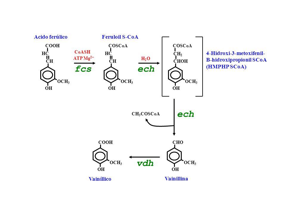 fcs ech ech vdh Acido ferúlico Feruloil S-CoA 4-Hidroxi-3-metoxifenil-