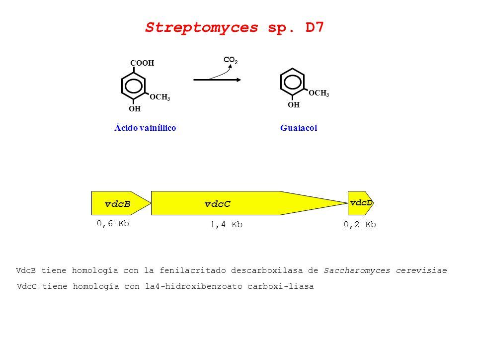 Streptomyces sp. D7 vdcB vdcC CO2 Ácido vainíllico Guaiacol vdcD