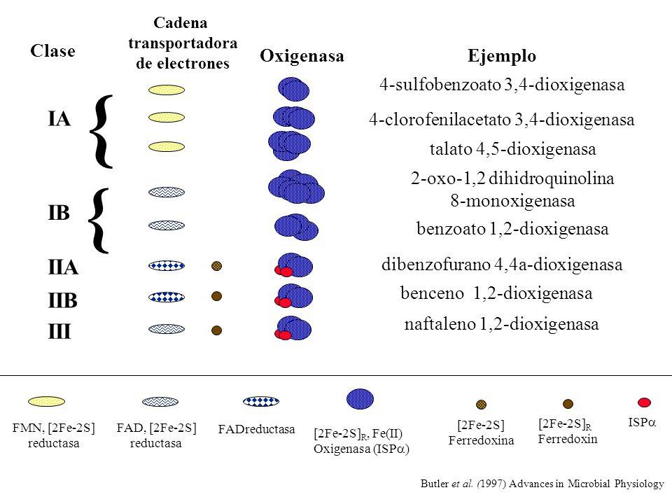 { { IA IB IIA IIB III Clase Oxigenasa Ejemplo