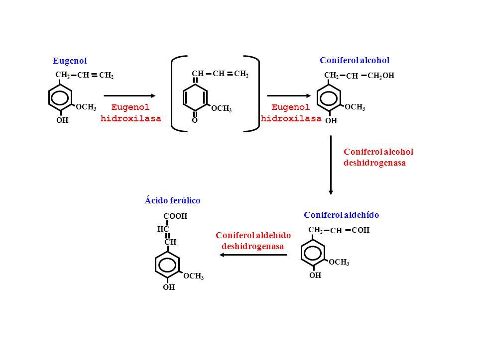 Eugenol Coniferol alcohol Eugenol hidroxilasa Eugenol hidroxilasa