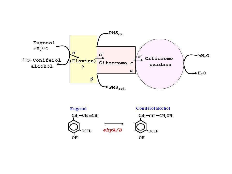 PMSox. Eugenol +H218O ½H2O e- e- e- Citocromo oxidasa 18O-Coniferol