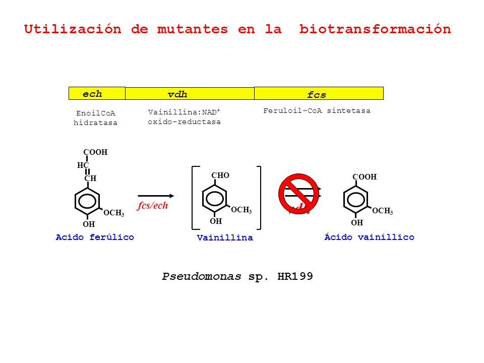 Utilización de mutantes en la biotransformación