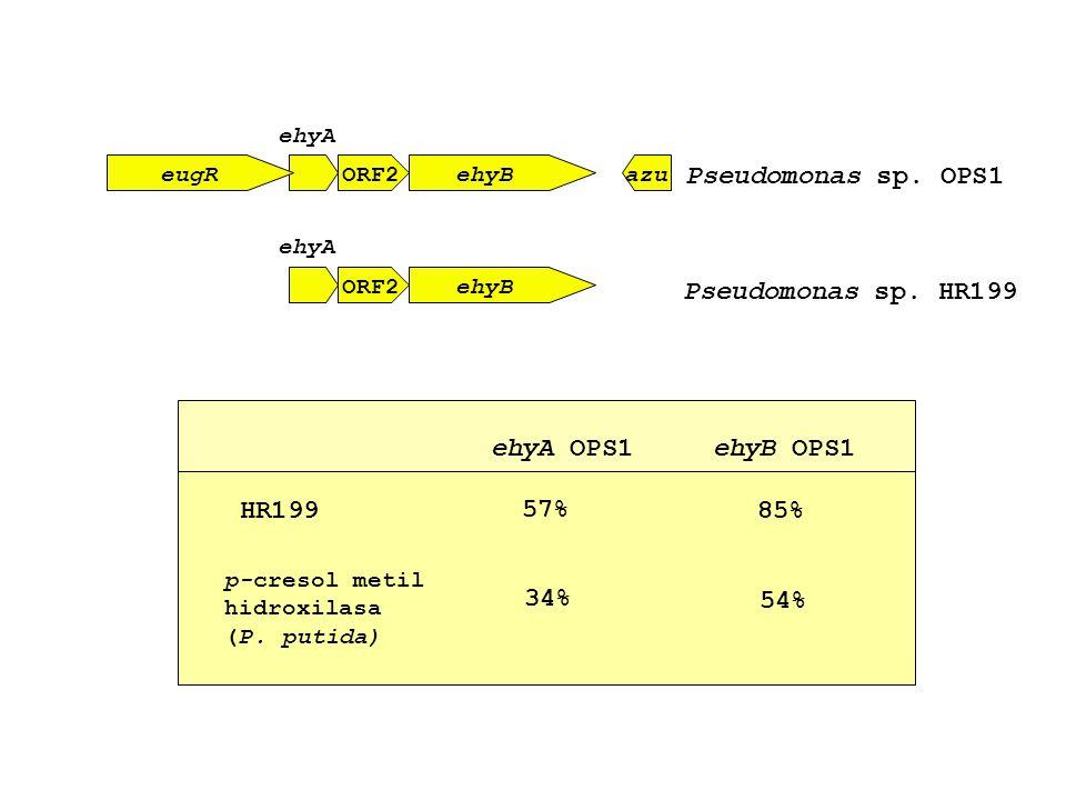 Pseudomonas sp. OPS1 Pseudomonas sp. HR199 ehyA OPS1 ehyB OPS1 HR199