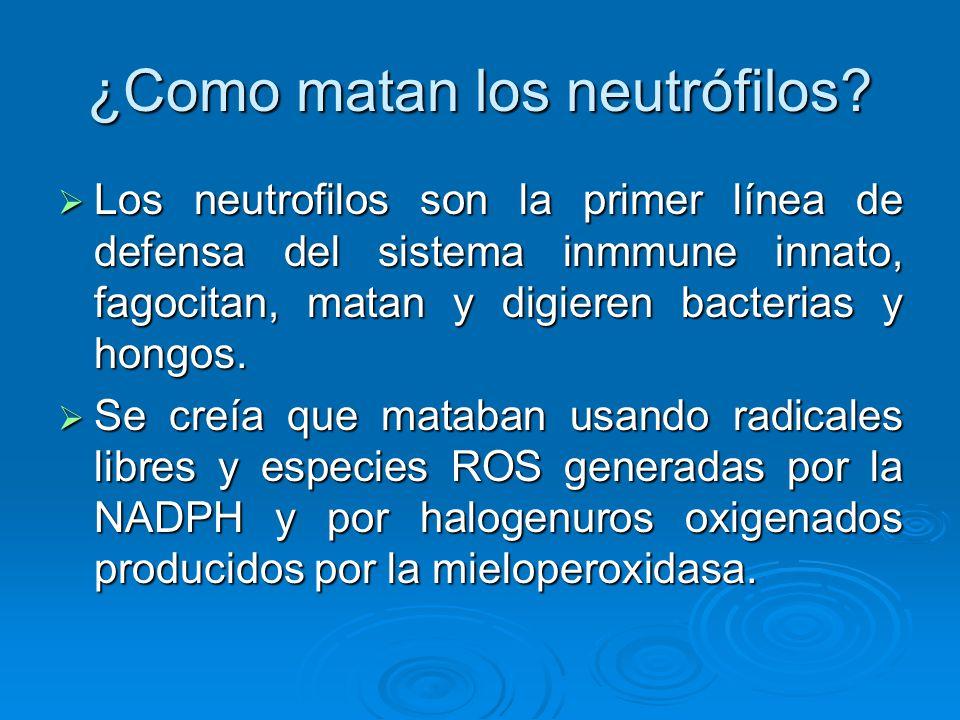 ¿Como matan los neutrófilos