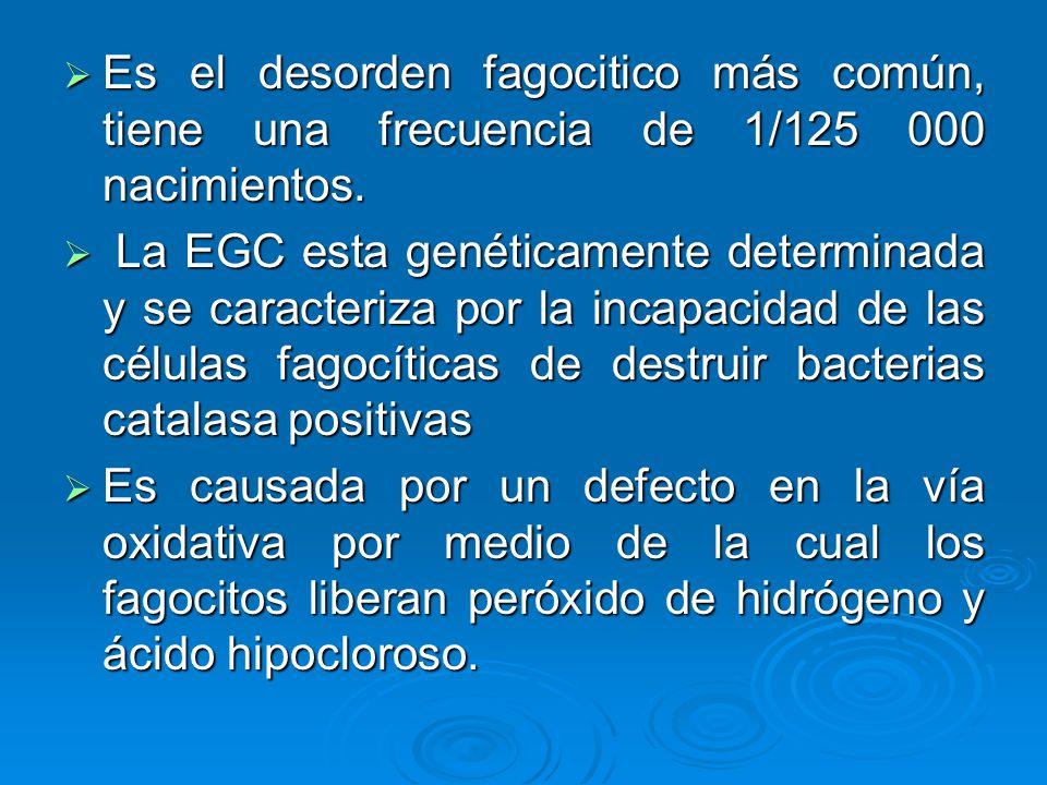 Es el desorden fagocitico más común, tiene una frecuencia de 1/125 000 nacimientos.