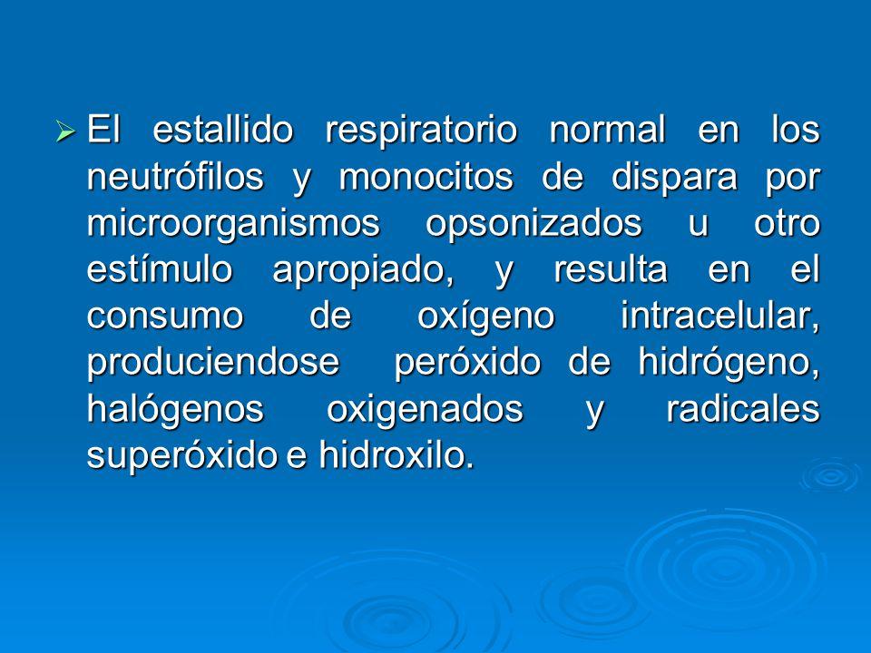 El estallido respiratorio normal en los neutrófilos y monocitos de dispara por microorganismos opsonizados u otro estímulo apropiado, y resulta en el consumo de oxígeno intracelular, produciendose peróxido de hidrógeno, halógenos oxigenados y radicales superóxido e hidroxilo.