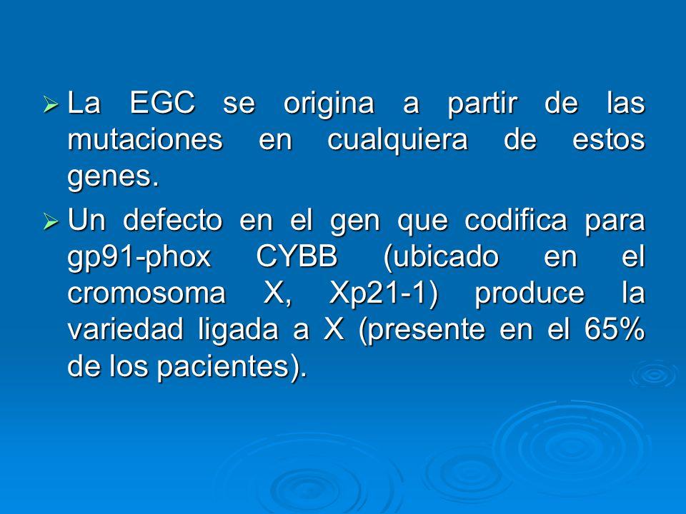 La EGC se origina a partir de las mutaciones en cualquiera de estos genes.