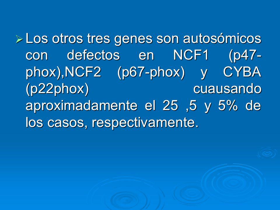 Los otros tres genes son autosómicos con defectos en NCF1 (p47-phox),NCF2 (p67-phox) y CYBA (p22phox) cuausando aproximadamente el 25 ,5 y 5% de los casos, respectivamente.