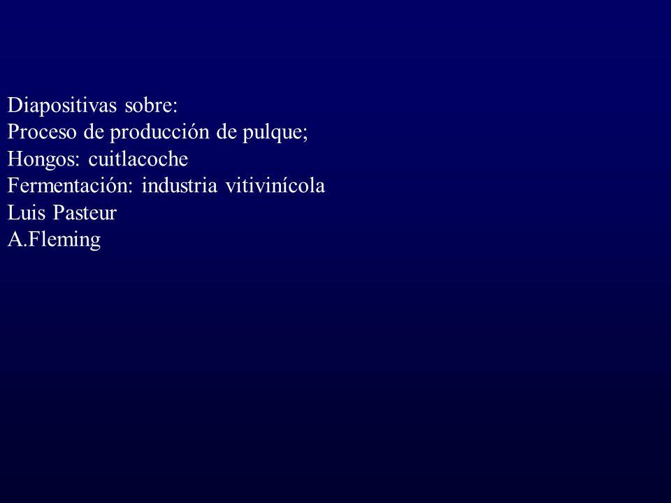 Diapositivas sobre: Proceso de producción de pulque; Hongos: cuitlacoche. Fermentación: industria vitivinícola.