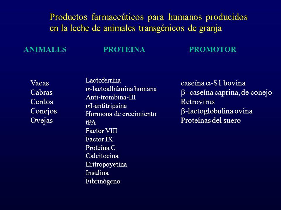 Productos farmaceúticos para humanos producidos en la leche de animales transgénicos de granja