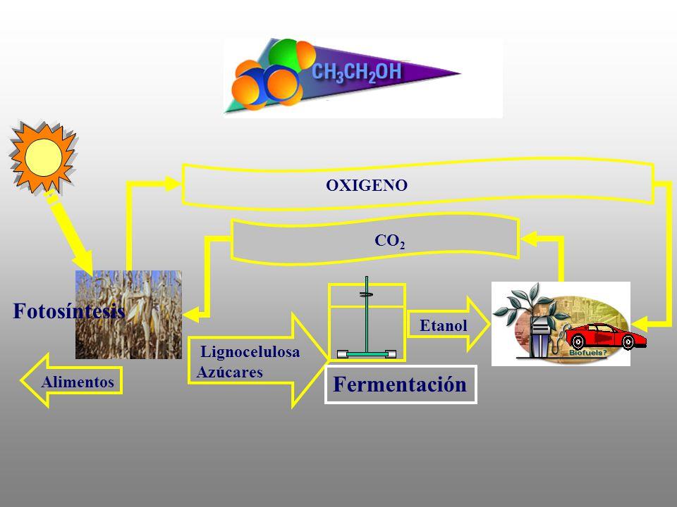 Fotosíntesis Fermentación OXIGENO CO2 Etanol Lignocelulosa Azúcares