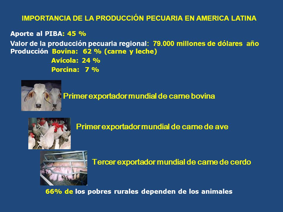 Primer exportador mundial de carne bovina