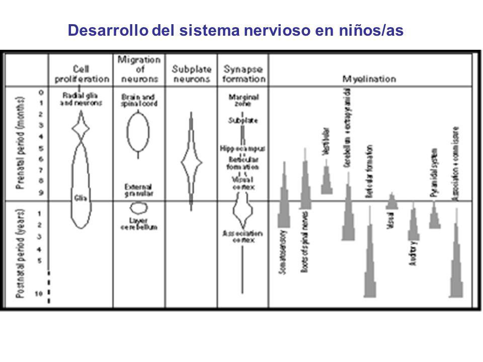 Desarrollo del sistema nervioso en niños/as