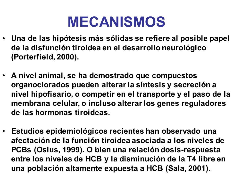 MECANISMOS Una de las hipótesis más sólidas se refiere al posible papel de la disfunción tiroidea en el desarrollo neurológico (Porterfield, 2000).
