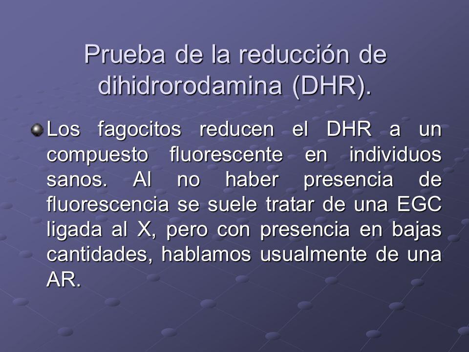 Prueba de la reducción de dihidrorodamina (DHR).
