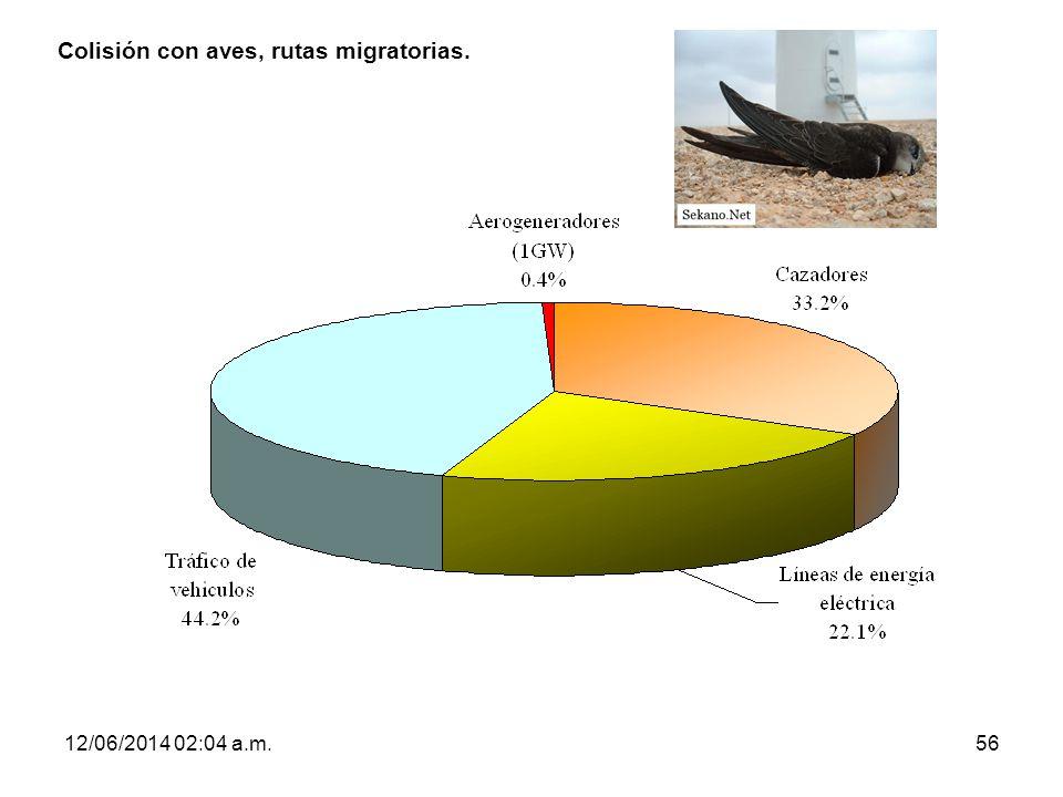 Colisión con aves, rutas migratorias.