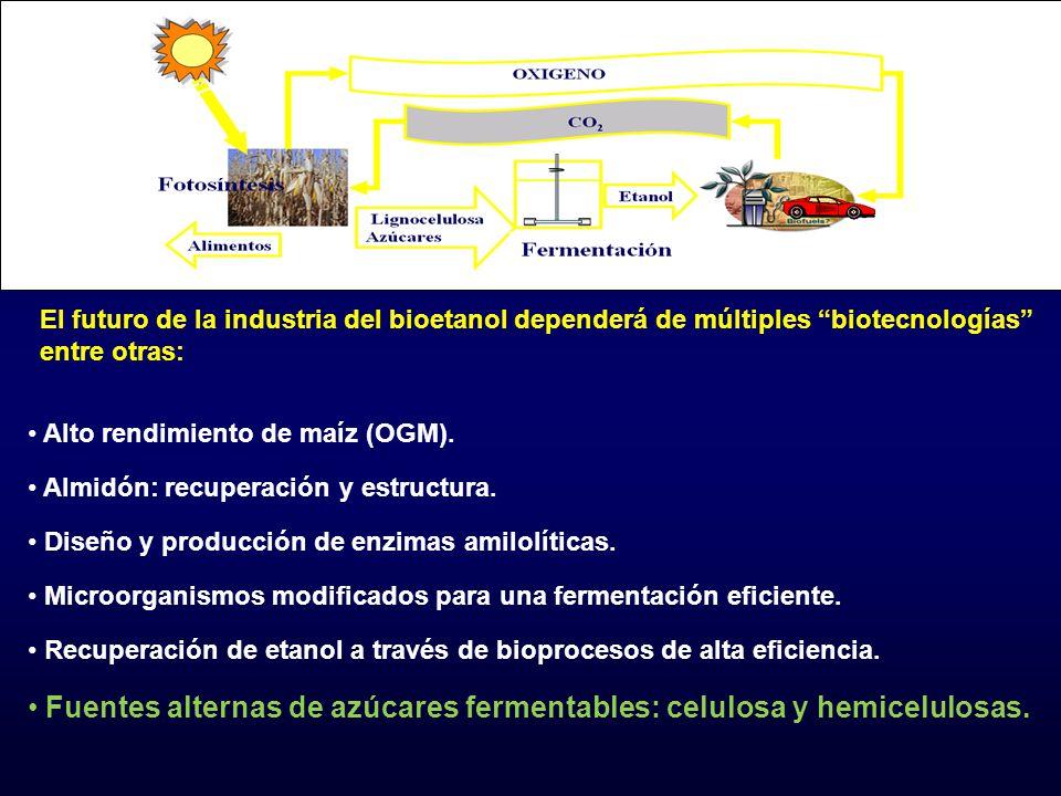 Fuentes alternas de azúcares fermentables: celulosa y hemicelulosas.