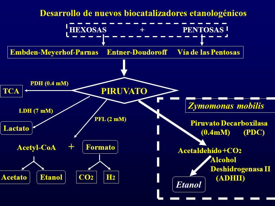 Desarrollo de nuevos biocatalizadores etanologénicos