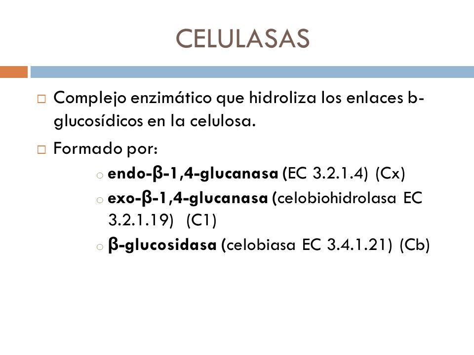CELULASAS Complejo enzimático que hidroliza los enlaces b- glucosídicos en la celulosa. Formado por: