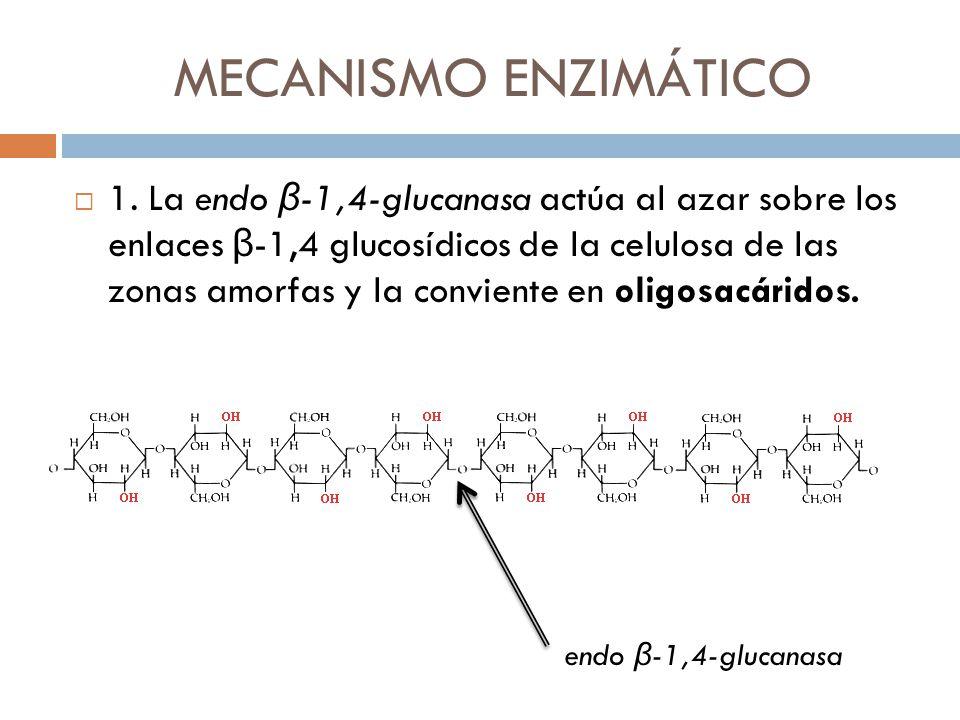 MECANISMO ENZIMÁTICO