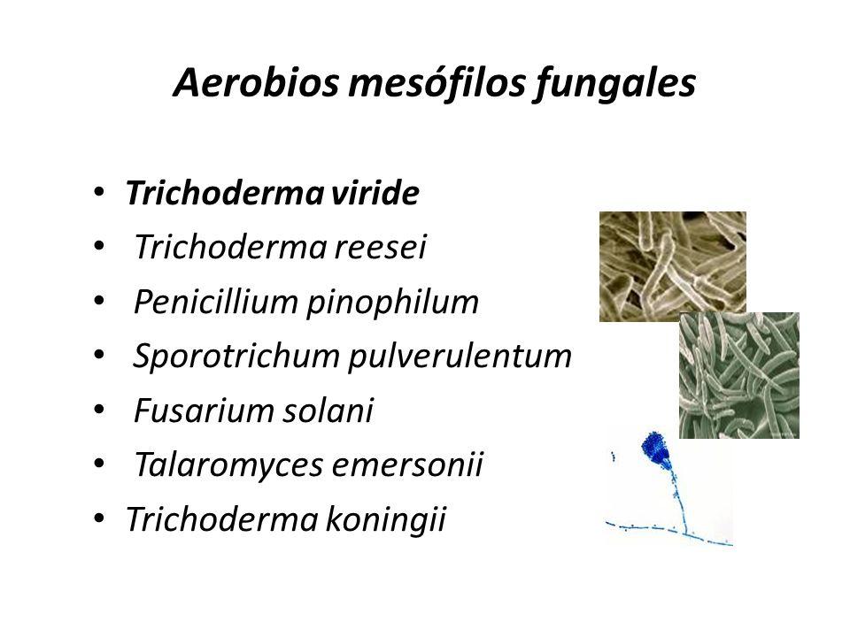 Aerobios mesófilos fungales