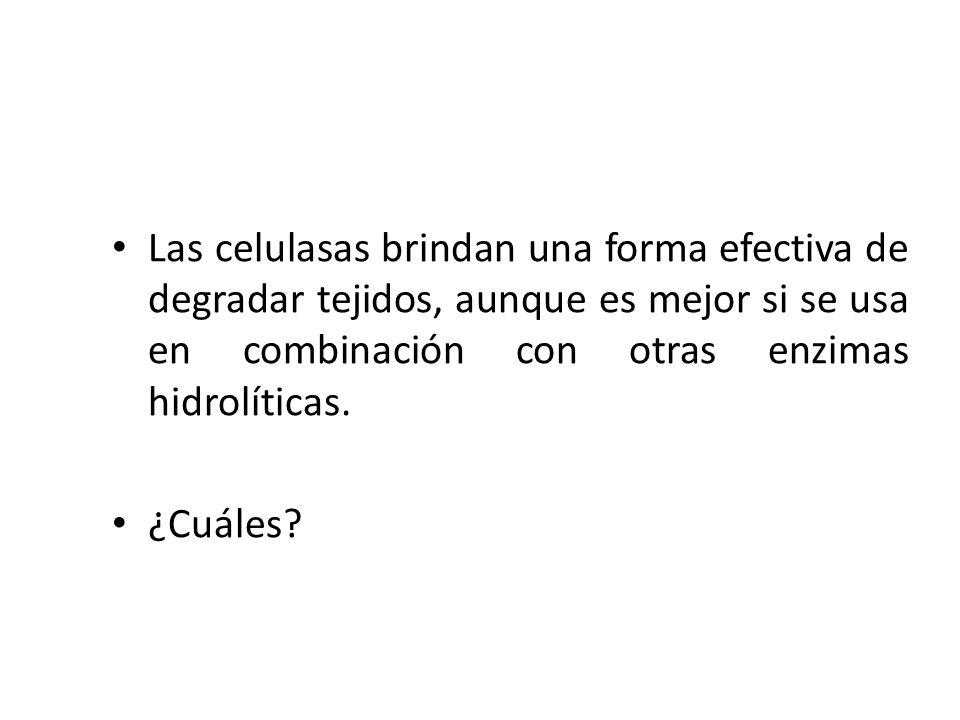 Las celulasas brindan una forma efectiva de degradar tejidos, aunque es mejor si se usa en combinación con otras enzimas hidrolíticas.