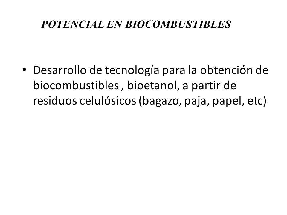 POTENCIAL EN BIOCOMBUSTIBLES