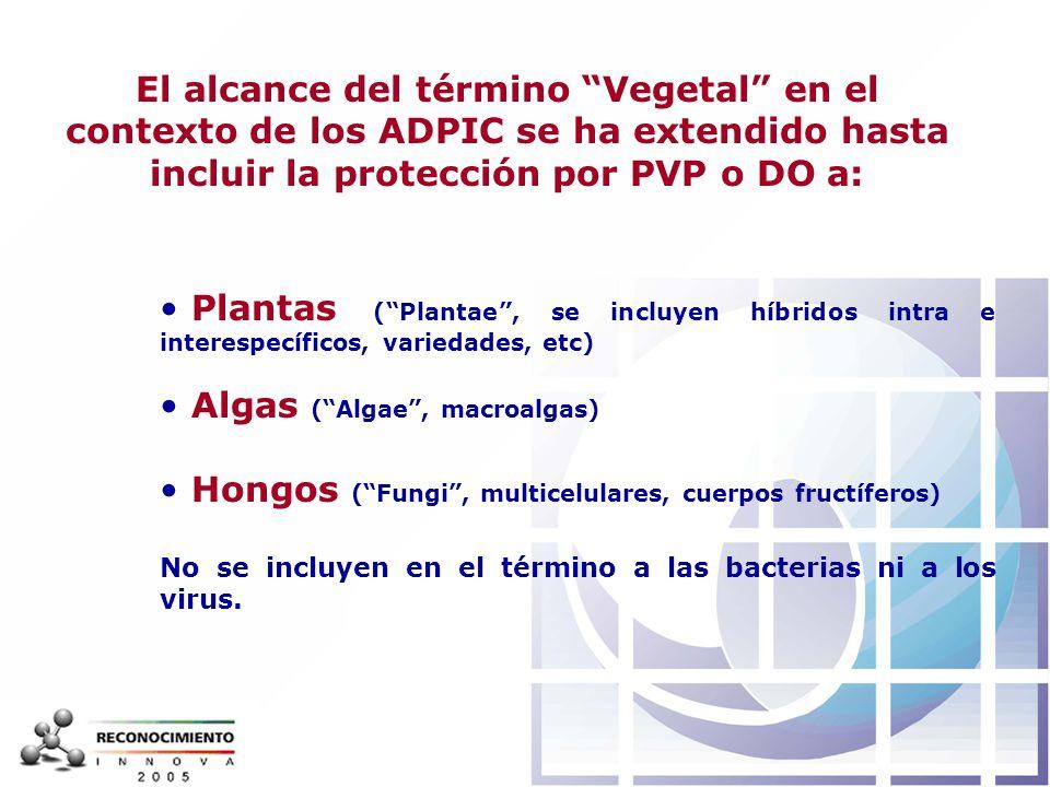 Algas ( Algae , macroalgas)
