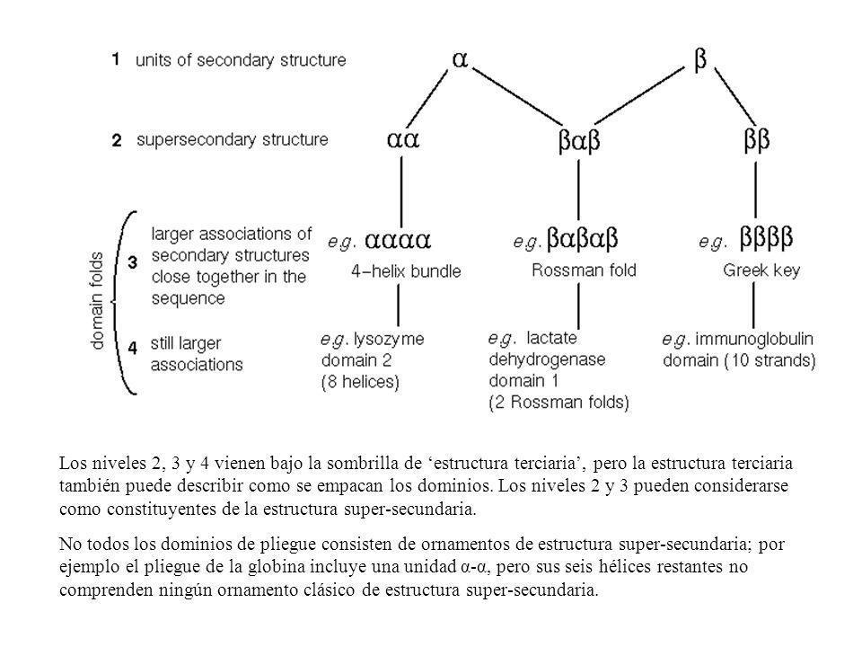 Los niveles 2, 3 y 4 vienen bajo la sombrilla de 'estructura terciaria', pero la estructura terciaria también puede describir como se empacan los dominios. Los niveles 2 y 3 pueden considerarse como constituyentes de la estructura super-secundaria.