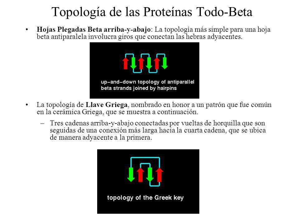 Topología de las Proteínas Todo-Beta