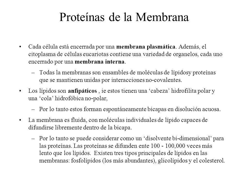 Proteínas de la Membrana