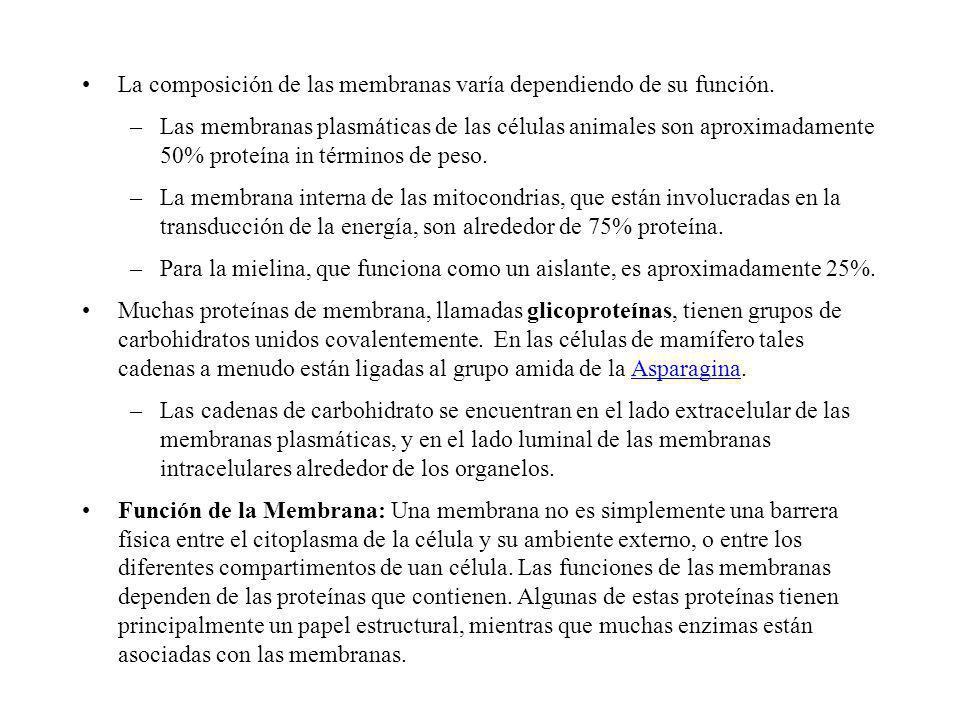 La composición de las membranas varía dependiendo de su función.