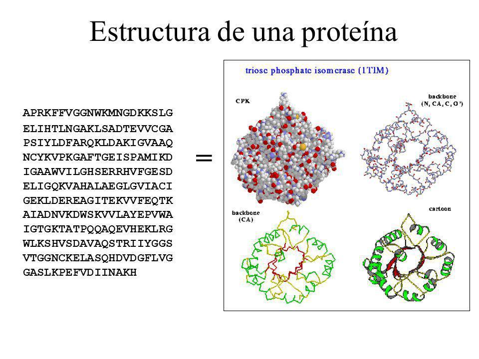 Estructura de una proteína