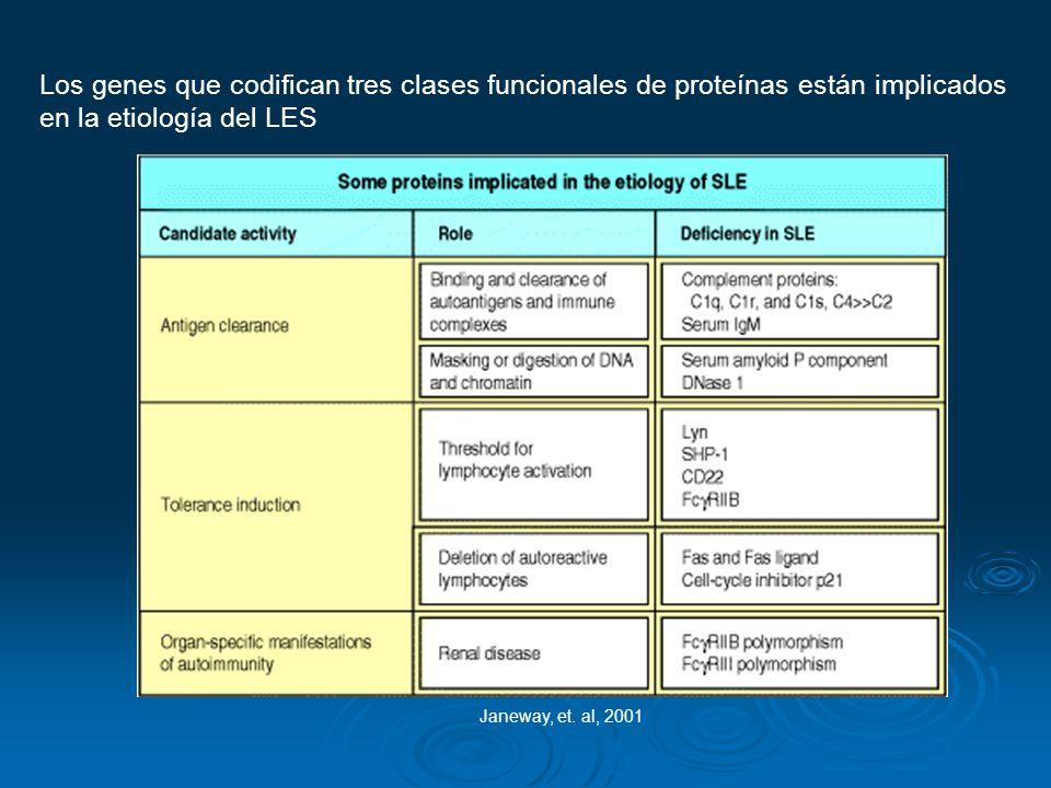 Los genes que codifican tres clases funcionales de proteínas están implicados en la etiología del LES