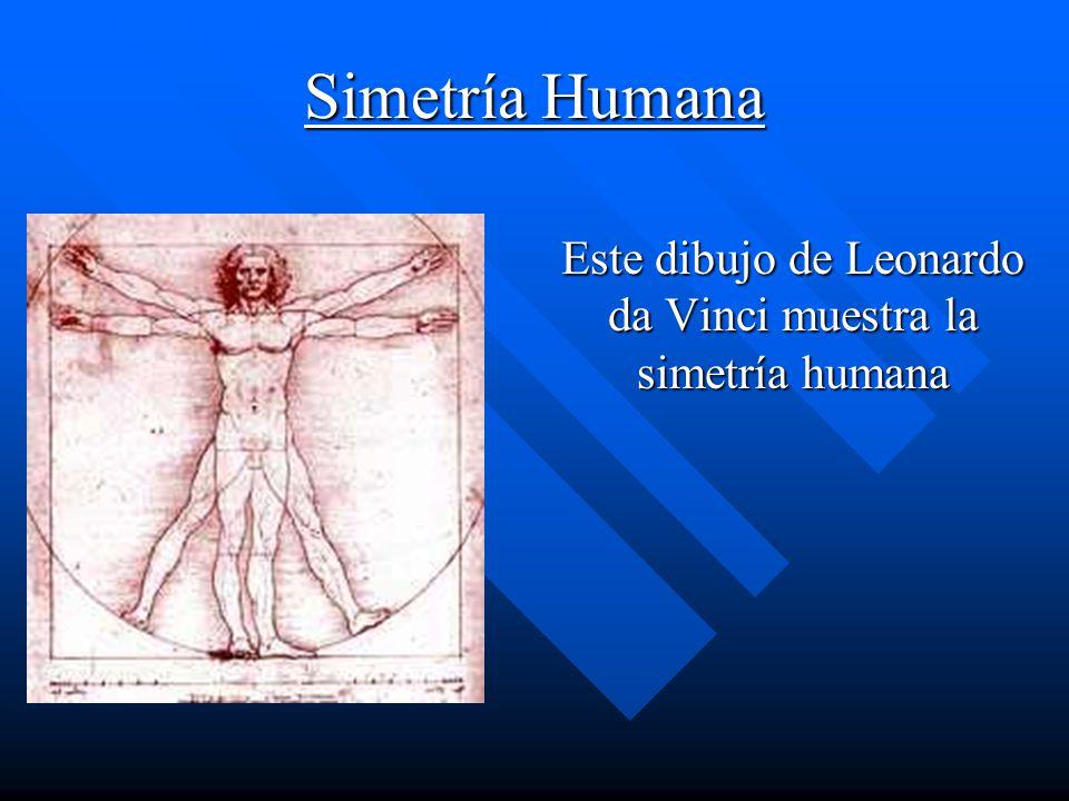 Este dibujo de Leonardo da Vinci muestra la simetría humana