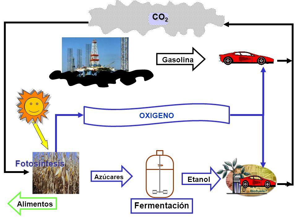 CO2 Fotosíntesis Fermentación Gasolina OXIGENO Etanol Alimentos