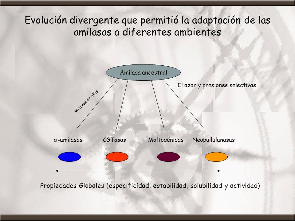 Evolución divergente que permitió la adaptación de las amilasas a diferentes ambientes