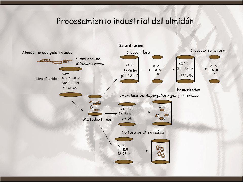 Procesamiento industrial del almidón