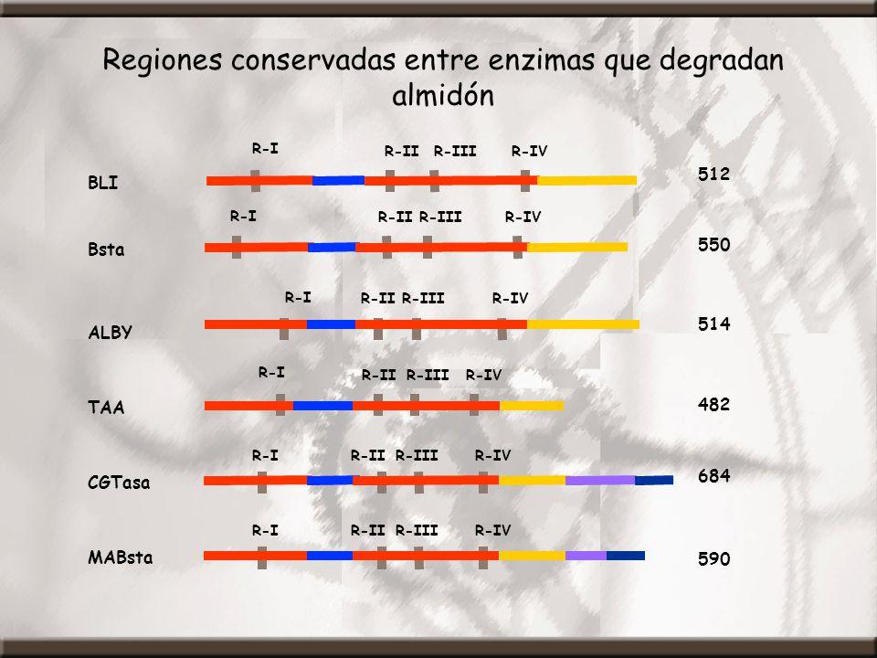 Regiones conservadas entre enzimas que degradan almidón