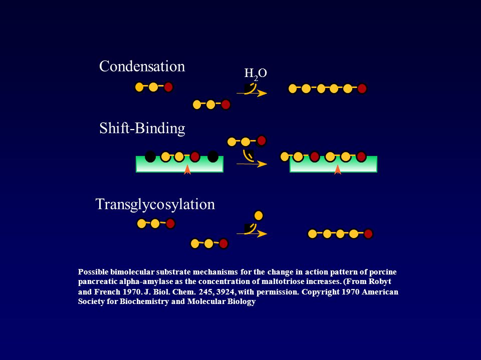 Condensation Shift-Binding T ransglycosylation H O 2