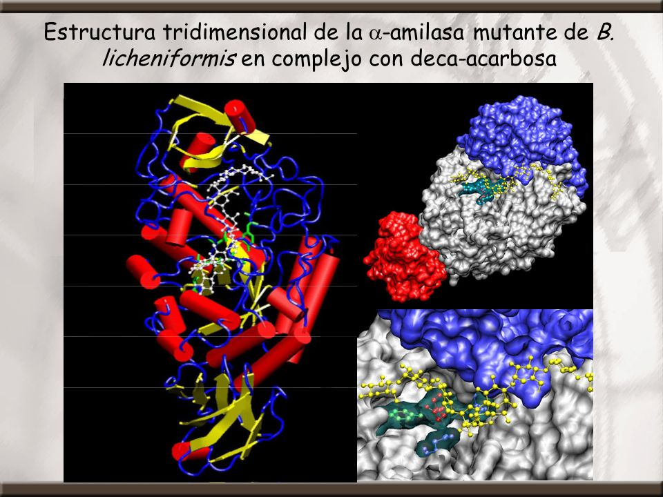 Estructura tridimensional de la a-amilasa mutante de B