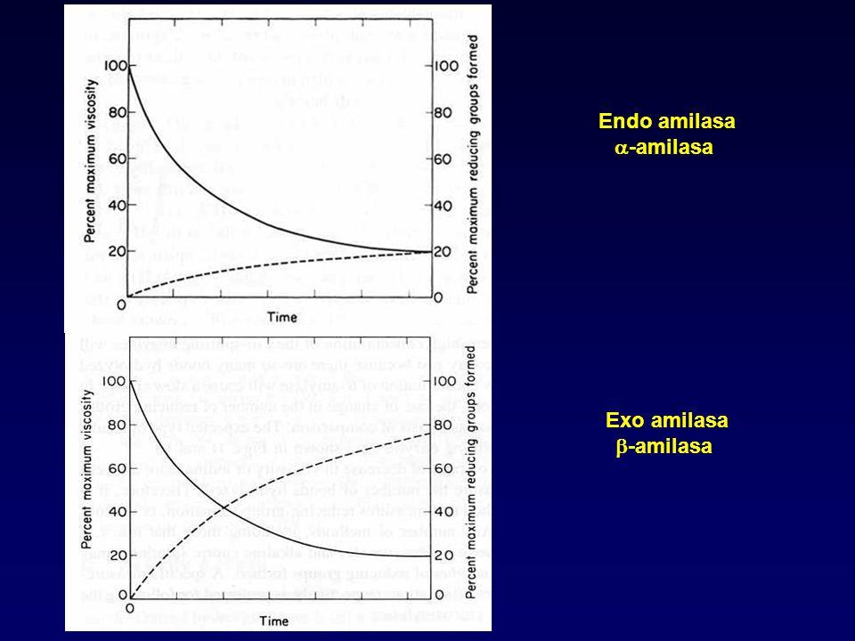 Endo amilasa a-amilasa Exo amilasa b-amilasa