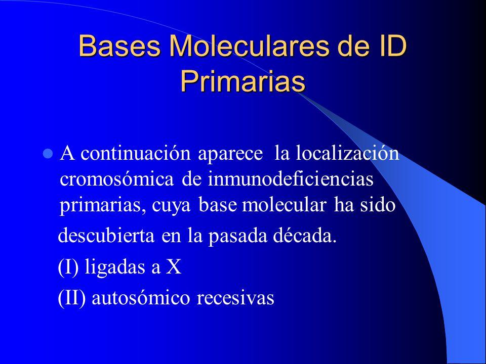 Bases Moleculares de ID Primarias