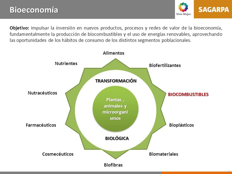 Antecedentes de los Biocombustibles