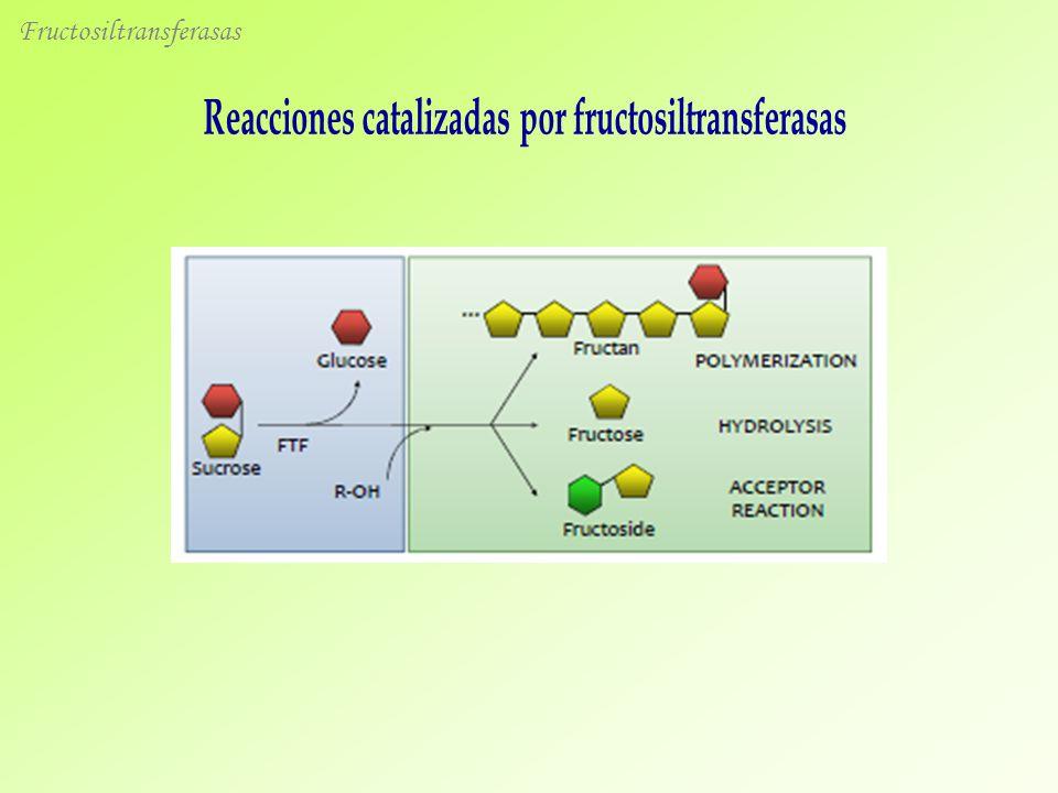 Reacciones catalizadas por fructosiltransferasas