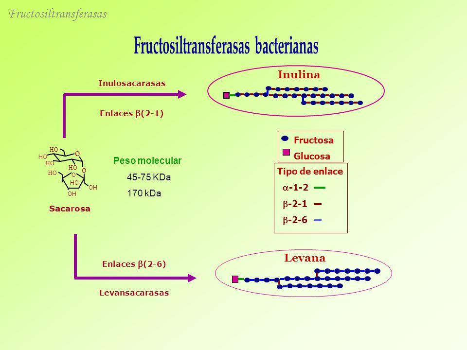 Fructosiltransferasas bacterianas
