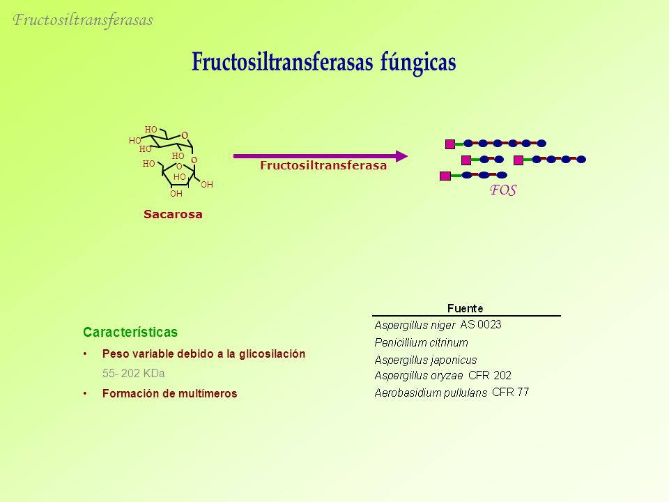 Fructosiltransferasas fúngicas Fructosiltransferasa