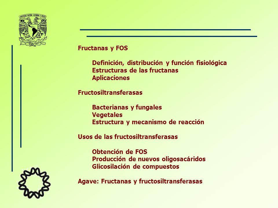 Fructanas y FOS Definición, distribución y función fisiológica. Estructuras de las fructanas. Aplicaciones.