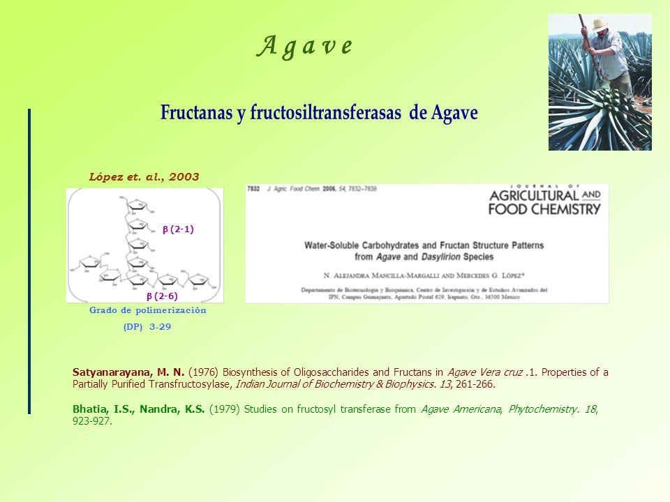 Fructanas y fructosiltransferasas de Agave Grado de polimerización